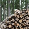 Qué es la biomasa y por qué es uno de los puntos claves en las energías renovables por Ferran Burriel